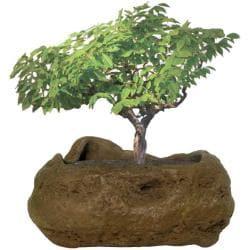Bonsai Rock Garden - Thumbnail 0