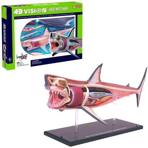 Master 4D Vision Shark Anatomy Model