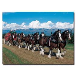 'Clydesdales in Blue Sky Mountains' Medium Canvas Art