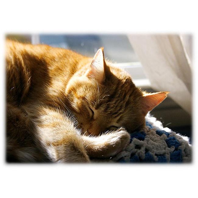 Orange Cat Art 'Cat Nap' Photographic Print