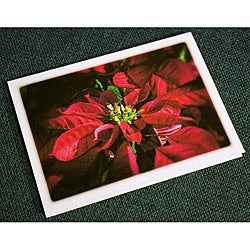 Orange Cat Art 'Poinsettia' Christmas Cards (Set of 12)