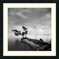 Framed Art Print 'Water Tree' by Moises Levy 24 x 24-inch