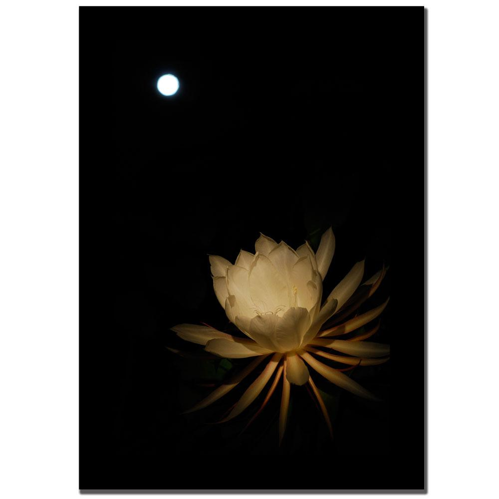 Kurt Shaffer 'Full Moon Bloom' Canvas Art