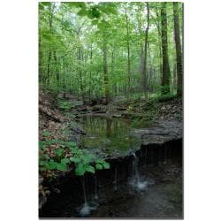Kurt Shaffer 'Tiny Forest Falls' Canvas Art