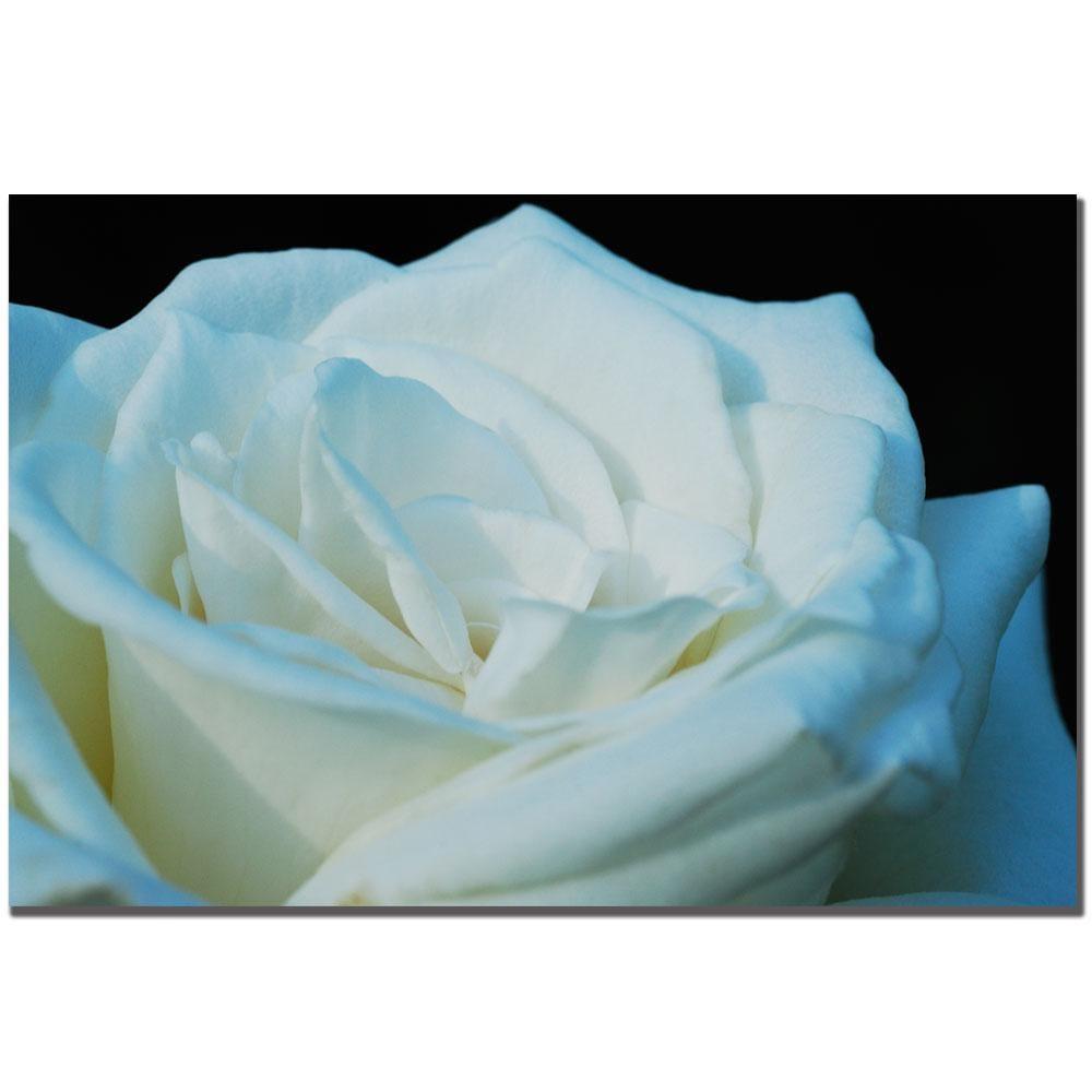 Kurt Shaffer 'White Rose' Canvas Art