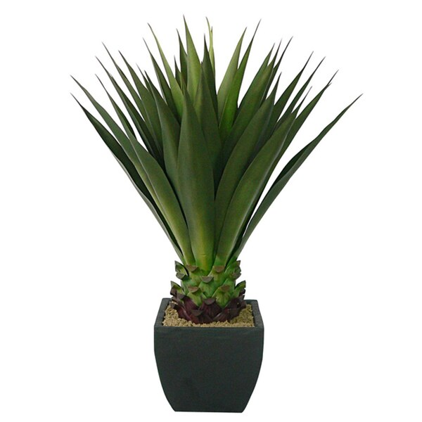 Shop Laura Ashley 43 Inch Artificial Aloe Plant Free