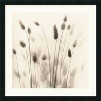 Framed Art Print 'Italian Tall Grass No. 1' by Alan Blaustein 26 x 26-inch