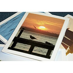 Orange Cat Art 'Seascape Collection' Note Cards (Set of 4)