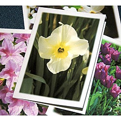 Orange Cat Art 'Springtime Collection' Note Cards (Set of 4)