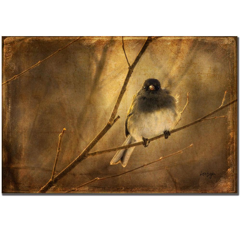 Lois Bryan 'Backlit Birdie Being Buffeted' Canvas Art