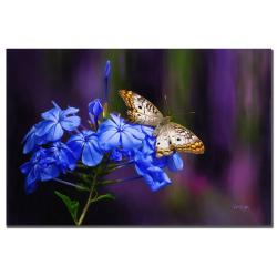 Lois Bryan 'White Peacock' Medium Contemporary Gallery-Wrapped Canvas Art - Thumbnail 2