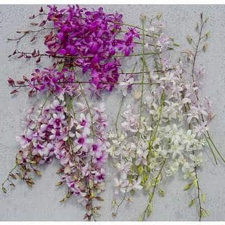 Dendrobium Orchids (50 stems)|https://ak1.ostkcdn.com/images/products/56396/P918506.jpg?impolicy=medium