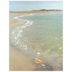 Orange Cat Art Jill M. Davis 'Shell in the Sand' Photographic Print