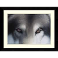 Framed Art Print 'Eyes of the Hunter: Gray Wolf' by Charles Alexander 27 x 21-inch