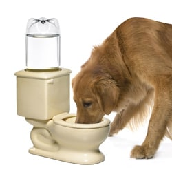 Refilling Toilet Water Bowl - Thumbnail 1
