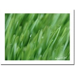 MIguel Paredes 'Plant Close-up IV' Canvas Art - Thumbnail 1