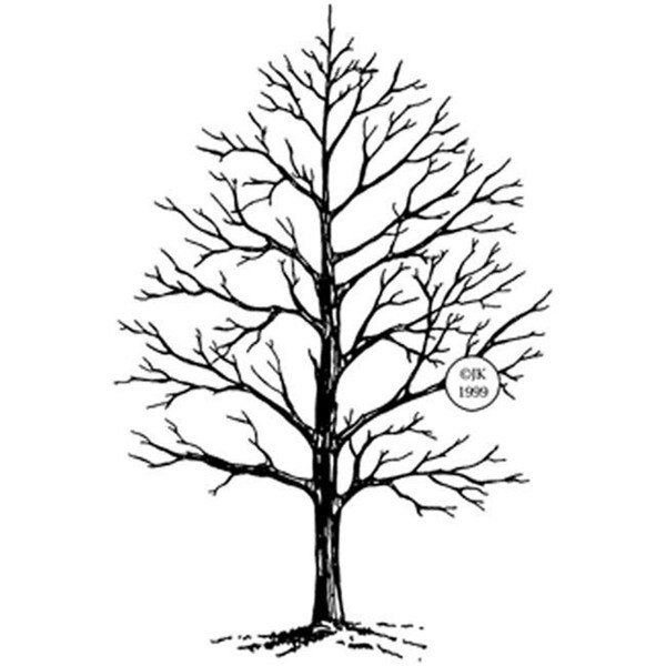 Judikins Winter Tree Rubber Stamp
