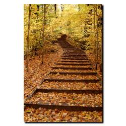 Kurt Shaffer 'Fall Stairway' Canvas Art