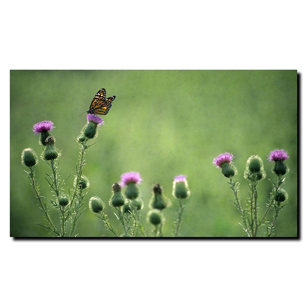 Kurt Shaffer 'Monarch Thistles' Canvas Art