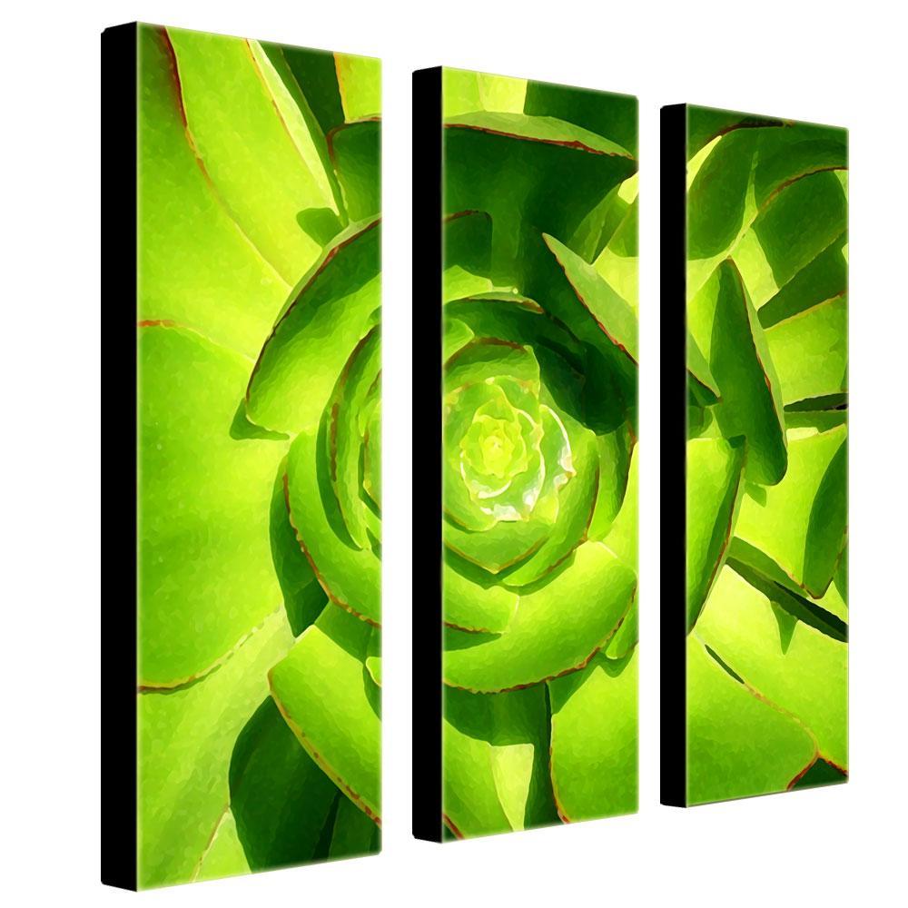 Amy Vangsgard 'Succulent Square' 3-piece Art Set