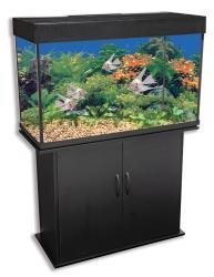 Delta Queen 46-gallon Rectangular Aquarium and Black Stand
