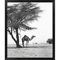 Alexis De Vilar 'Camel and Tree, Desert of Mauritania' Framed Art Print
