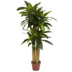Silk 4-foot Potted Corn Stalk Dracaena Plant - Thumbnail 2