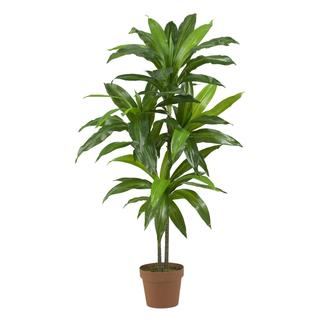 Dracaena Real Touch Silk Plant - Thumbnail 0