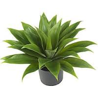 Silk Agave Plant