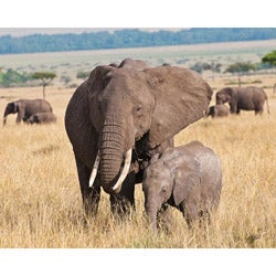 Stewart Parr 'Elephants in Kenya Mother and Baby' Photograph