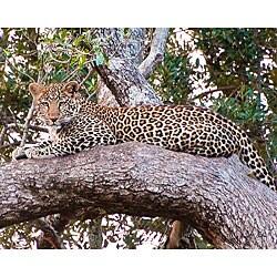 Stewart Parr 'Leopard in Kenya - Resting' Photo Art