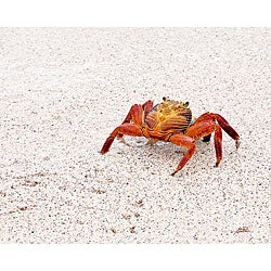 Stewart Parr 'Sand Crab in the Galapagos Islands' Photograph