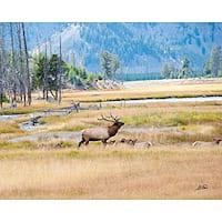 Stewart Parr 'Elk Deer in Jackson Hole Wyoming USA' Unframed Print