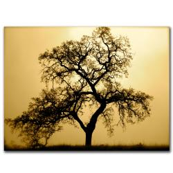 Colleen Proppe 'Pacific Oak Sorich Park' Canvas Art