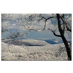 Lois Bryan 'Winter Scene' Canvas Art