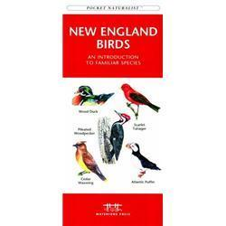 New England Birds Book