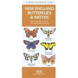 New England Butterflies amp; Moths Book