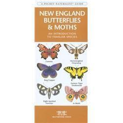 New England Butterflies amp; Moths Book