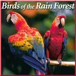 Naturescapes Music Birds of the Rain CD