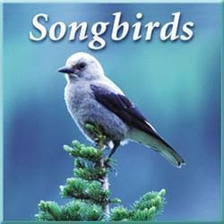 Naturescapes Music Songbirds CD