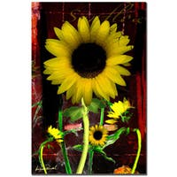 Miguel Paredes 'Sunflower II' Gallery-wrapped Canvas Art
