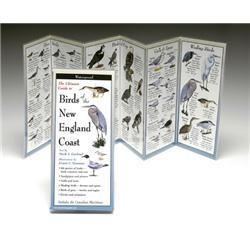Birds New England Coast Book