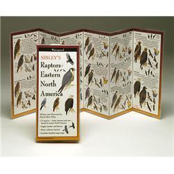 Sibleyapos;s Raptors Eastern North America Book