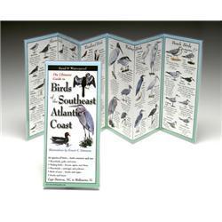 Birds Southeast Atlantic Coast Book
