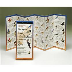 Common Butterflies New England Book