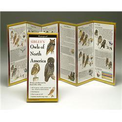 Sibleyapos;s Owls North America Book