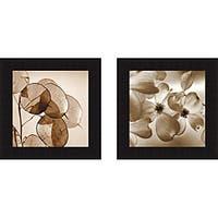 Ann Dahlgren 'Silver Dollars & Dogwood' Framed Print - Multi