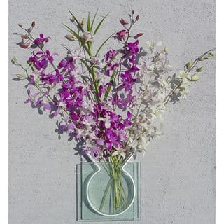 Dendrobium Orchids (6 Stems)|https://ak1.ostkcdn.com/images/products/61473/P918909.jpg?impolicy=medium