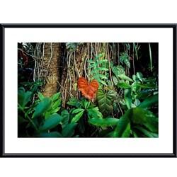 John K. Nakata 'Rain Forest' Framed Art Print