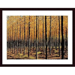 John K. Nakata 'Trees' Framed Art Print